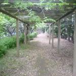 夢の島緑道1