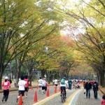 世田谷健康マラソン(2)