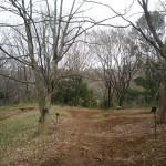 生田緑地7