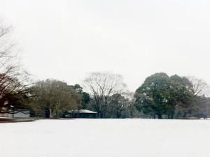 砧公園雪見ラン